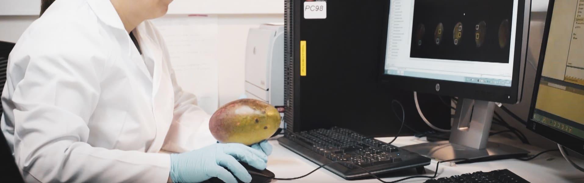 Mangos, aguacates y transformación digital: el inspirador caso de Trops